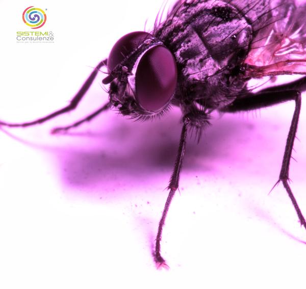 Certificazione Iso 16636 Pest Management norma tecnica disinfestatori