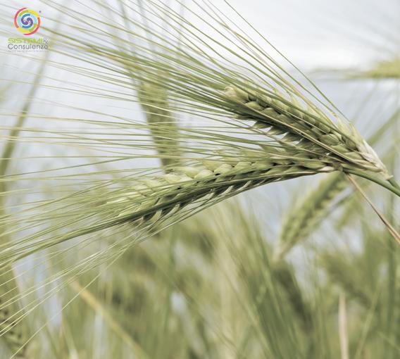 Contaminanti alimentari limiti rischio chimico metalli pesanti residui fitosanitari