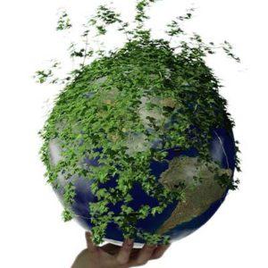 Vantaggi della Certificazione Ambientale Iso 14001 Gestione e Miglioramento