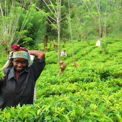 Il commercio equo sostenibile lo standard di certificazione fairtrade