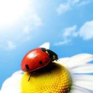 Pesticidi o fitosanitari