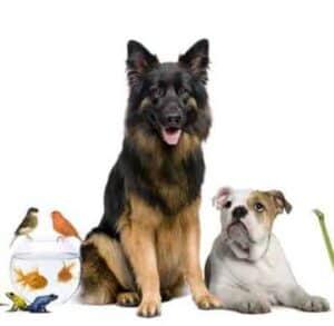 pet food alimenti per gli animali da compagnia