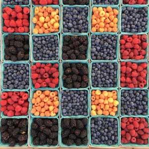 Igiene alimentare il Reg CE 852 e Reg CE 832