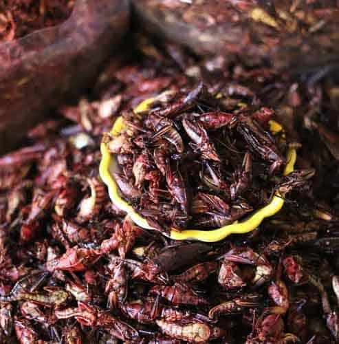 Entomofagia: gli insetti edibili sono così importanti